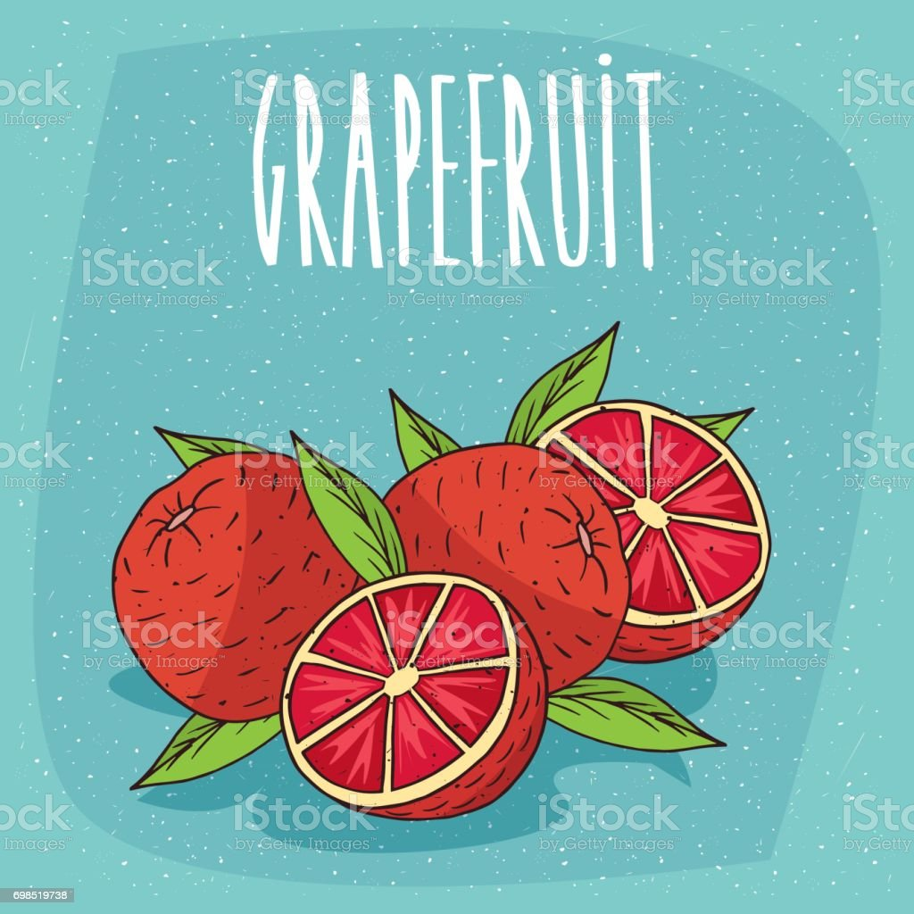 Isolated several ripe grapefruit fruits vector art illustration