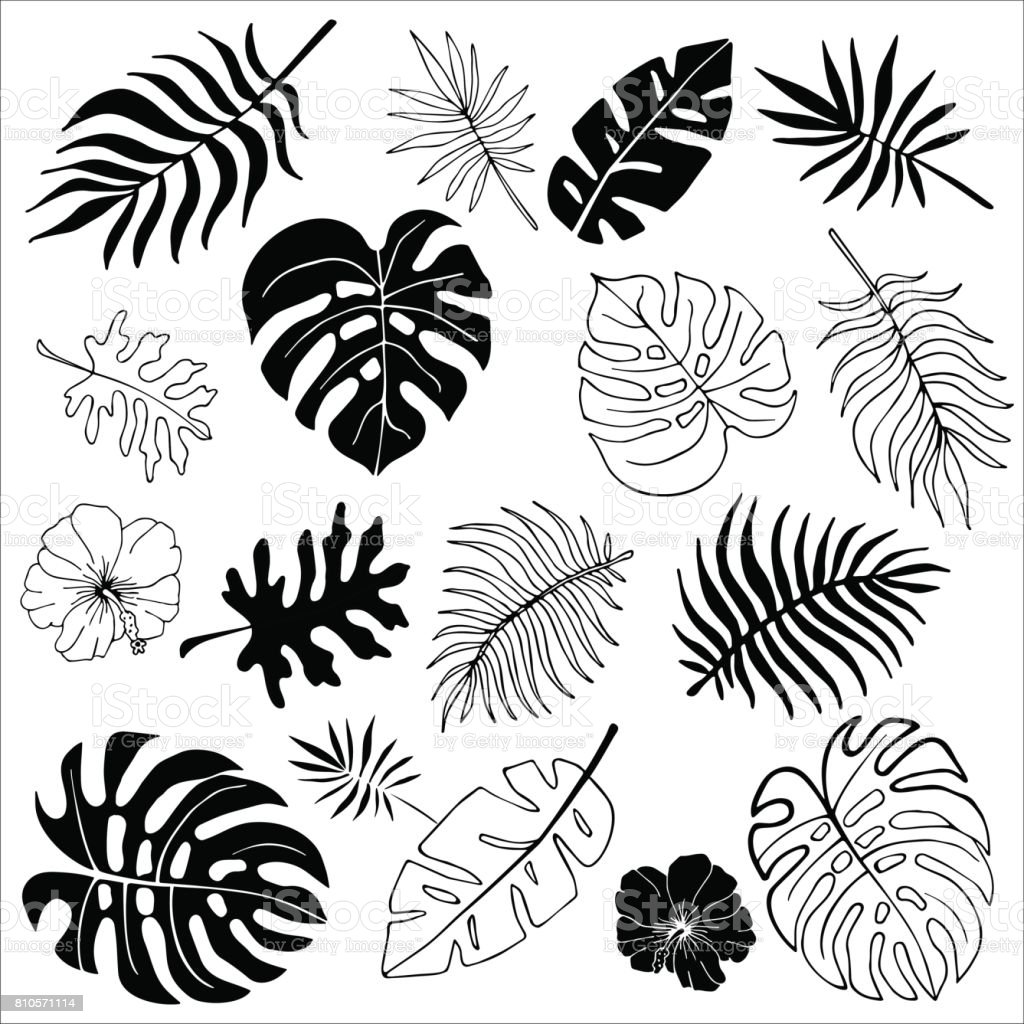 Isolated silhouettes of tropical palm leaves, jungle leaves vector art illustration