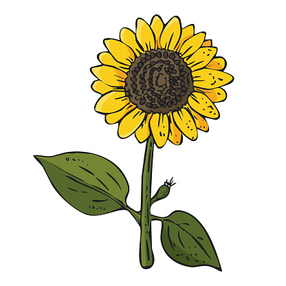 Isolated sunflower on white background. Original multi colored vector illustration of agricultural plant.