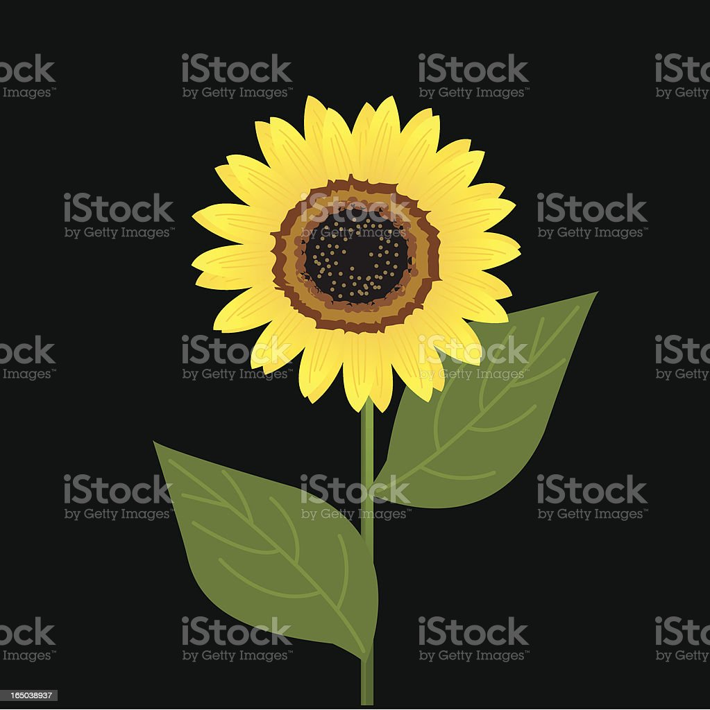 isolated sunflower royalty-free stock vector art