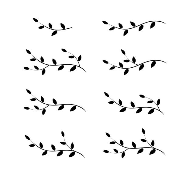 isolated tree branches with leaves - vine stock illustrations, clip art, cartoons, & icons