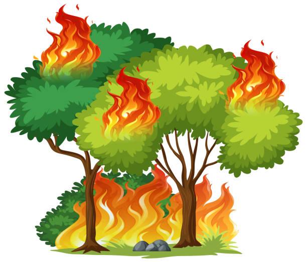 stockillustraties, clipart, cartoons en iconen met geïsoleerde boom in brand - illustraties van bosbrand