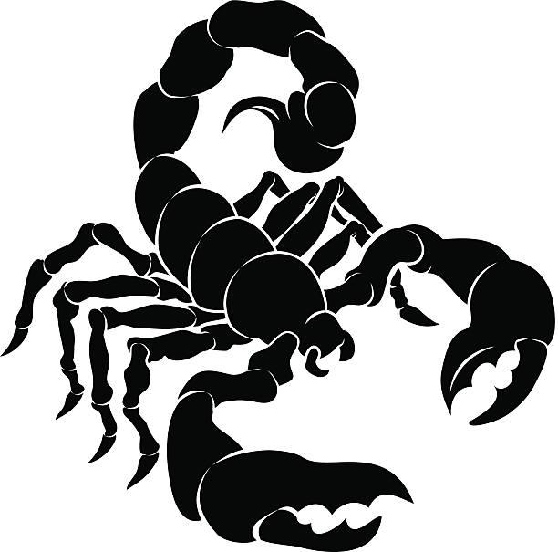 Top 60 Scorpion Clip A...