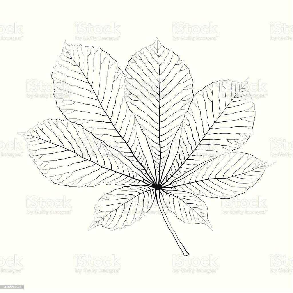 Isolated vector monochrome chestnut leaf. vector art illustration