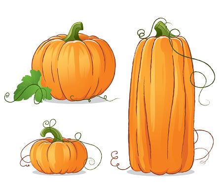 Isolated Vector Pumpkins Illustration