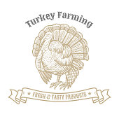 Isolated vintage golden and royal emblem of farm animal. Fresh and tasty Turkey meat farming. Butchery products market. Hand made illustration and lettering. Concept template for branding