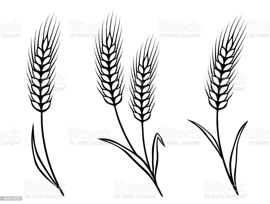 isolated wheat ears vector art illustration