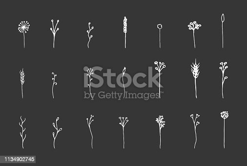Isolated botanical vector set. Hand drawn white lineart and solid herbs illustrations collection on black chalk board background