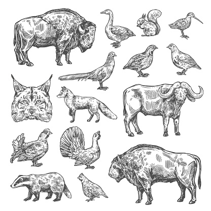 Isolated wild animals and birds, vector
