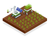 Isometric automation smart farming on the field. Artificial intelligence robots in agricultural. Organic food, agriculture concept