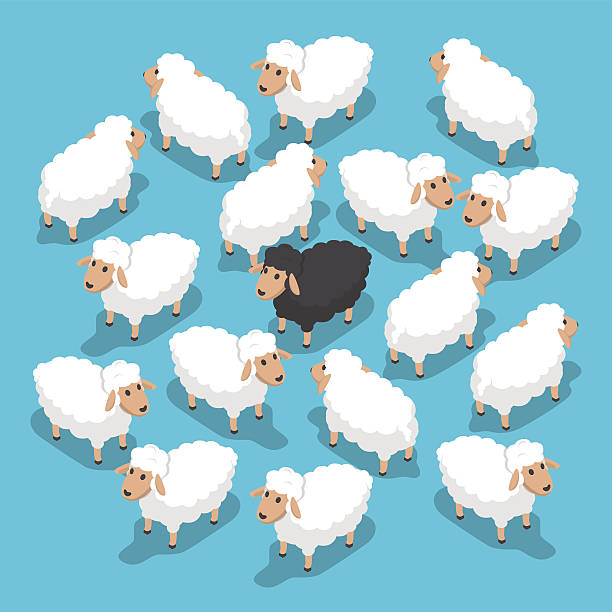 Isometric black sheep in the flock Isometric black sheep in the flock, outstanding, different, competitive advantage concept, VECTOR, EPS10 flock of sheep stock illustrations
