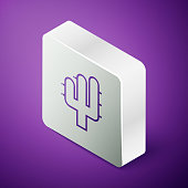Isometric line Cactus icon isolated on purple background. Silver square button. Vector Illustration
