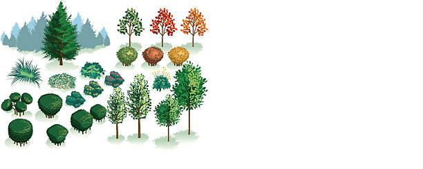 bildbanksillustrationer, clip art samt tecknat material och ikoner med isometric set, foliage of plants, trees and bushes - buske
