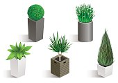 Isometric set of different plants in pots. Vector graphics