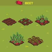 SET 10. Isometric Stage of growth Beet