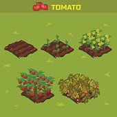 SET 1. Isometric Stage of growth Tomato