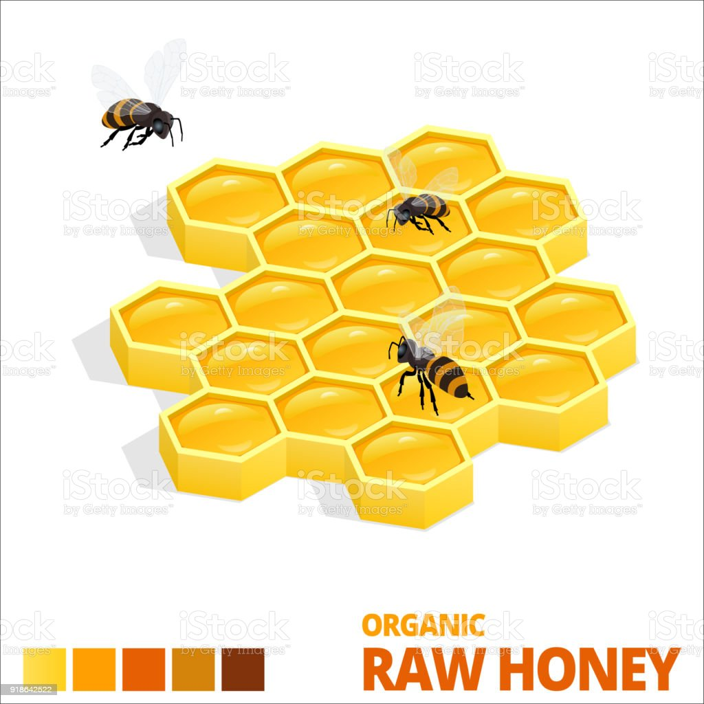 Isometric Sweet Honeycomb and bees. Raw Honey. Vector illustration isolated on white vector art illustration
