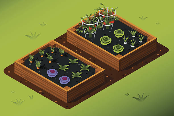 Isometric Vegetable Garden Garden boxes with vegetables. All colors are global. cultivated land stock illustrations