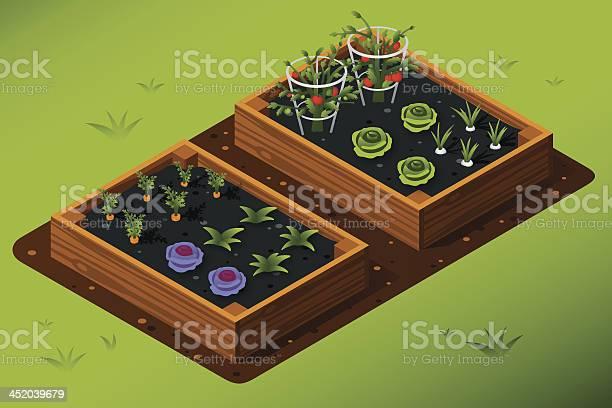 Isometric Vegetable Garden Stock Illustration - Download Image Now