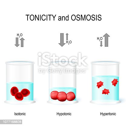 Isotonic, Hypotonic and Hypertonic solutions effects on animal cells. Tonicity and osmosis. This diagram shows the effects of hypertonic, hypotonic and istonic solutions to red blood cells. Vector illustration for biological, medical, science use