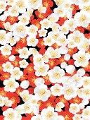 It is a pattern of beautiful Japanese kimono