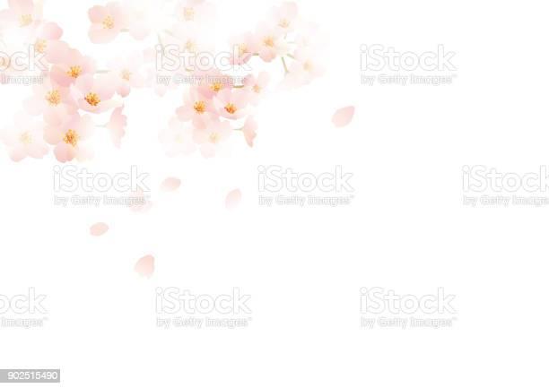 It is an illustration of japanese cherry vector id902515490?b=1&k=6&m=902515490&s=612x612&h=5qvtibjheq0rp9ngme9nu51ytqicaukwtst4 hyazvq=