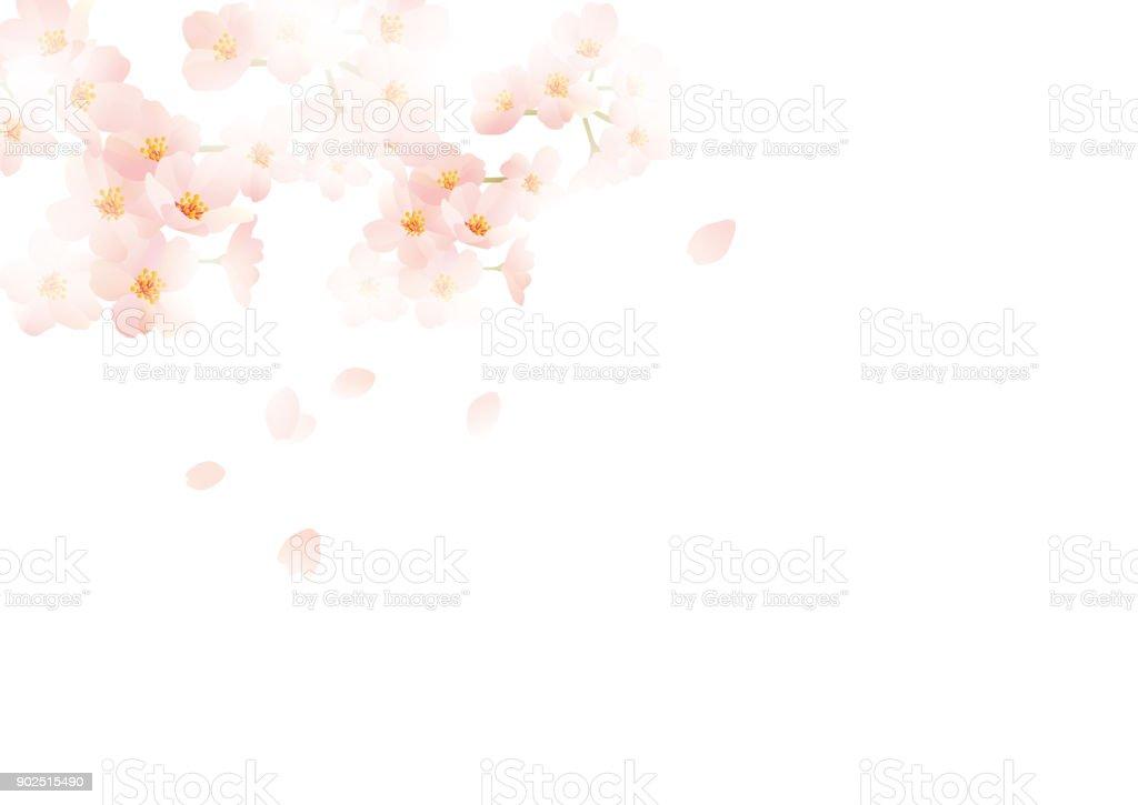 It is an illustration of Japanese cherry vector art illustration