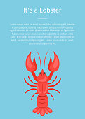 Its a lobster poster with red crayfish vector isolated on blue with text. Crawfish or crawdads, freshwater lobster, mudbugs or yabbies seafood