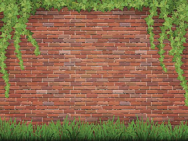 ilustrações de stock, clip art, desenhos animados e ícones de hera e relva na parede de tijolos no fundo - ivy building