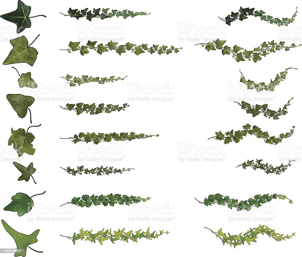 ivy branches collection vector art illustration