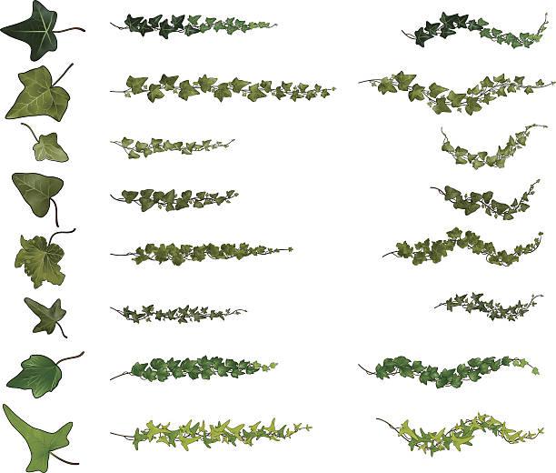 stockillustraties, clipart, cartoons en iconen met ivy branches collection - klimop