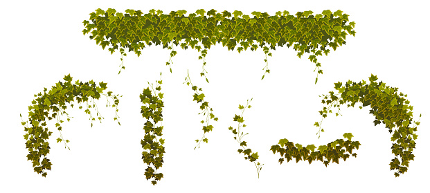 Ivy climbing vines with green plant leaves set