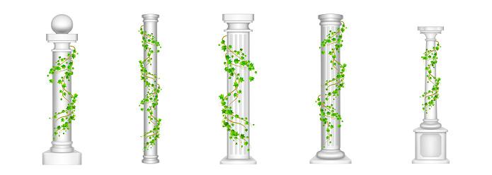 Ivy columns, antique pillars with climbing plant