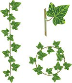 Ivy elements