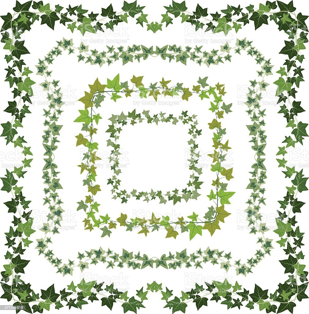 ivy frames vector art illustration