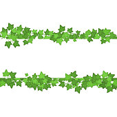 Ivy Green Leaves Different Types Set Decorative Ornament Element Line Vector illustration of Branches