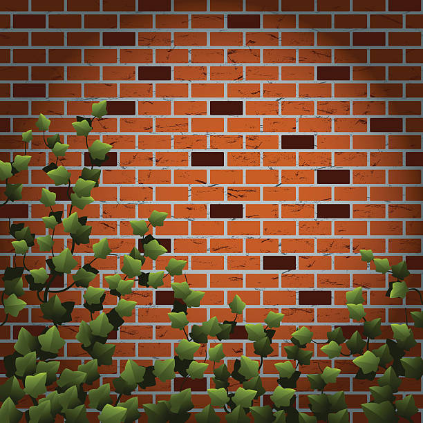 ilustrações de stock, clip art, desenhos animados e ícones de ivy na parede de tijolo - ivy building
