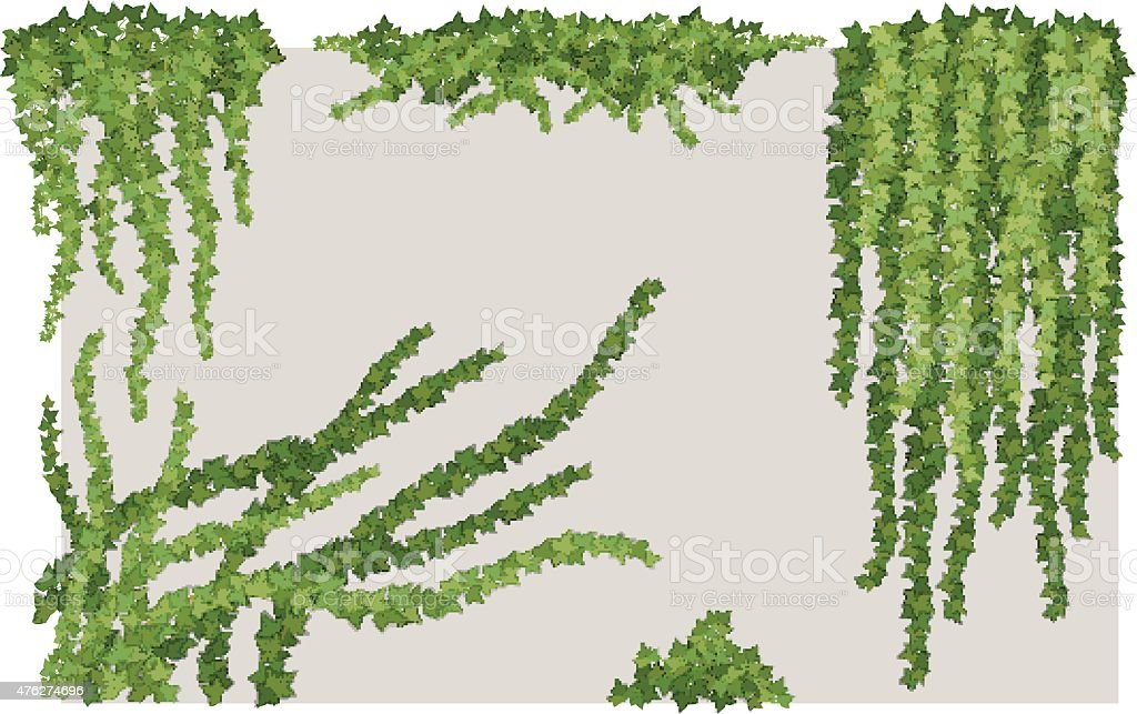 Ivy on wall vector art illustration