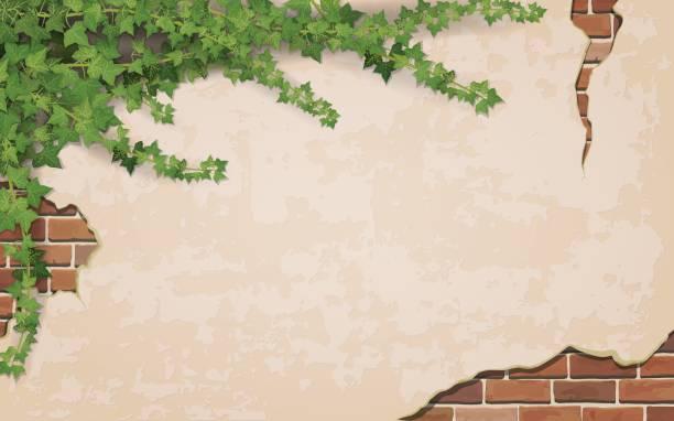 stockillustraties, clipart, cartoons en iconen met klimop op verweerde muur achtergrond - klimop