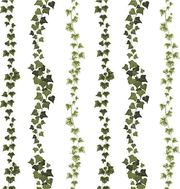 stockillustraties, clipart, cartoons en iconen met ivy seamless pattern - klimop