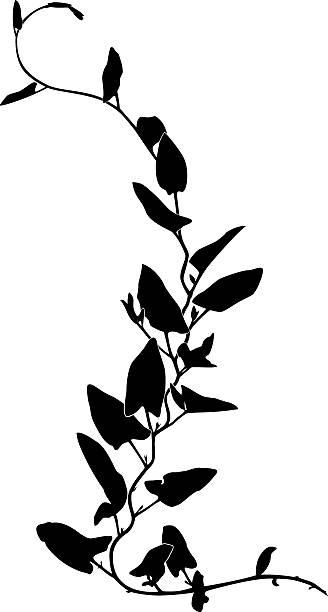 stockillustraties, clipart, cartoons en iconen met ivy silhouette - klimop
