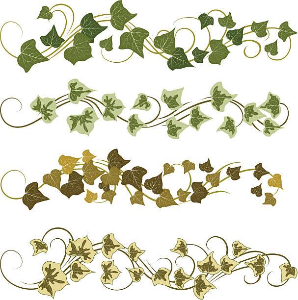stockillustraties, clipart, cartoons en iconen met ivy - klimop