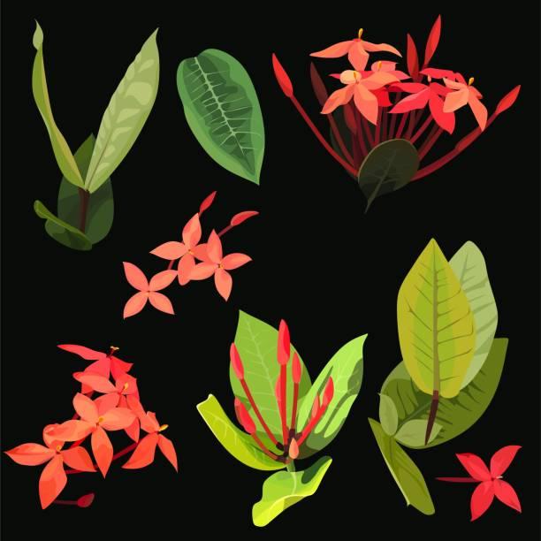 stockillustraties, clipart, cartoons en iconen met ixora tropische bloemen glinsterende clip art - pauwenkers