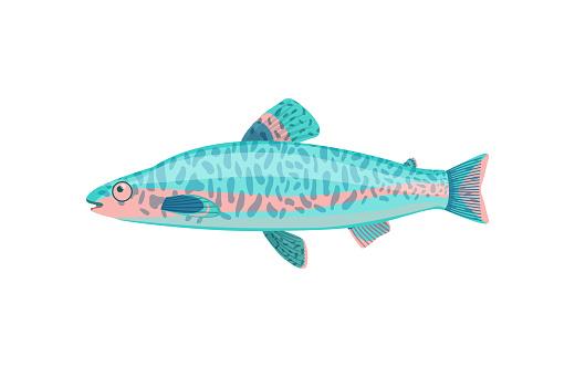 Jack Dempsey Fish Closeup Vector Illustration
