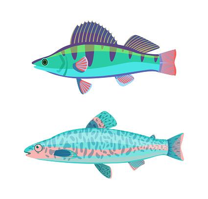 Jack Dempsey Marine Fish Set Vector Illustration