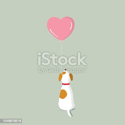 rear view of a Jack Russell Terrier puppy looking up at the pink heart shape balloon