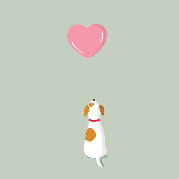 Jack Russell Terrier puppy with pink heart shape helium balloon rear view of a Jack Russell Terrier puppy looking up at the pink heart shape balloon domestic animals stock illustrations
