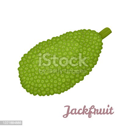 18 Cartoon Of The Jackfruit Tree Illustrations Royalty Free Vector Graphics Clip Art Istock Over 3,846 jackfruit pictures to choose from, with no signup needed. 18 cartoon of the jackfruit tree illustrations royalty free vector graphics clip art istock