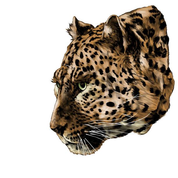 Jaguar head in profile looks away – artystyczna grafika wektorowa