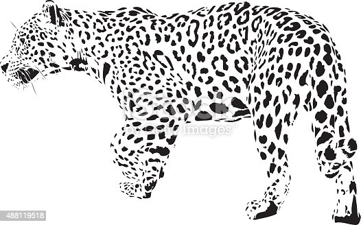 jaguar illustration bw stock vector art  u0026 more images of